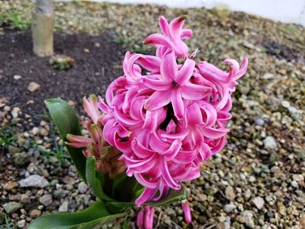 2019春の庭_d0291758_23405788.jpg