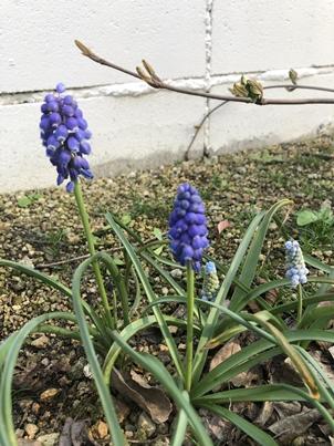 2019春の庭_d0291758_2341768.jpg