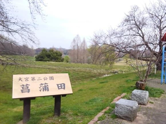 大宮第二、第三公園の春風景_d0116059_15464313.jpg