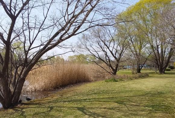 大宮第二、第三公園の春風景_d0116059_15592362.jpg