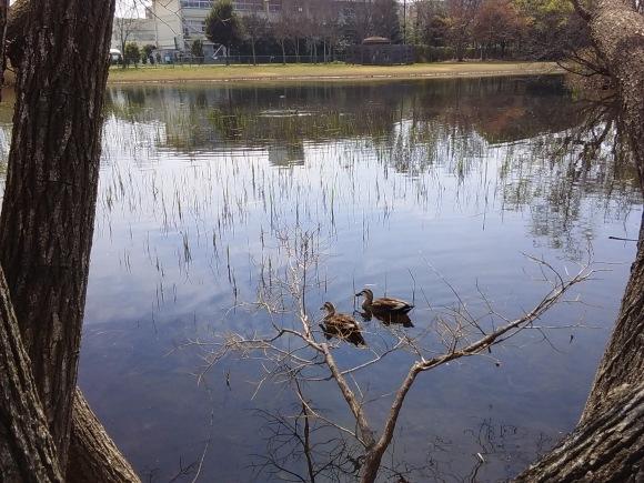大宮第二、第三公園の春風景_d0116059_16013466.jpg