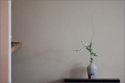 庭からユキヤナギ_c0086062_18000041.jpg