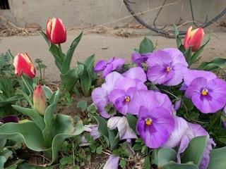 生涯学習センター&お庭の花_e0040673_12570114.jpg