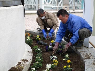 名古屋港水族館前花壇の植栽H31.3.6_d0338682_11424809.jpg