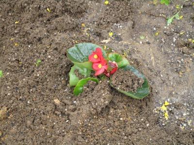 名古屋港水族館前花壇の植栽H31.3.6_d0338682_11450174.jpg