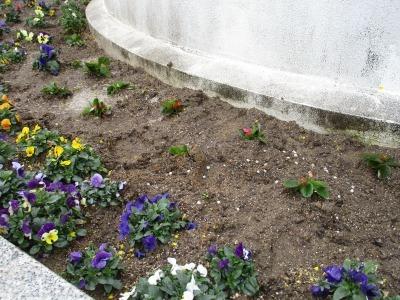 名古屋港水族館前花壇の植栽H31.3.6_d0338682_11460160.jpg