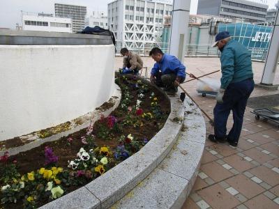 名古屋港水族館前花壇の植栽H31.3.6_d0338682_12484289.jpg