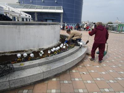名古屋港水族館前花壇の植栽H31.3.6_d0338682_12491782.jpg