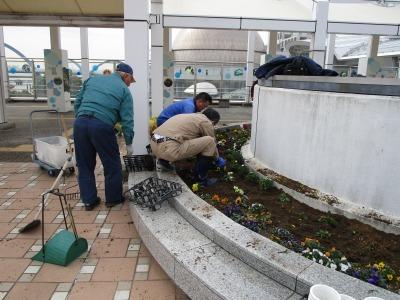 名古屋港水族館前花壇の植栽H31.3.6_d0338682_12500568.jpg