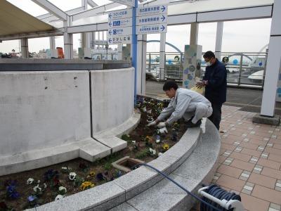 名古屋港水族館前花壇の植栽H31.3.6_d0338682_12501669.jpg