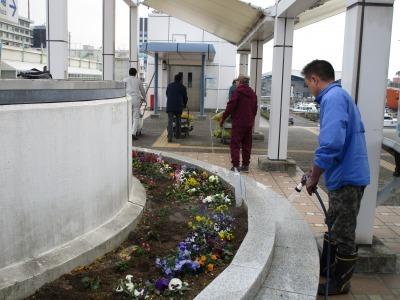 名古屋港水族館前花壇の植栽H31.3.6_d0338682_12503049.jpg