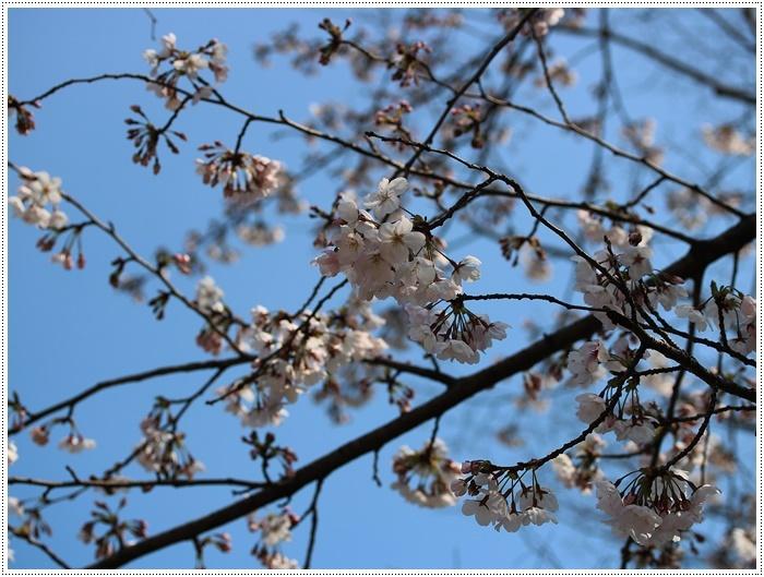 お散歩コースの桜の開花はもう少し先になりそうだけど、楽しみが膨らんできました~\\(>3(O^-)/ウフ☆_b0175688_19304978.jpg
