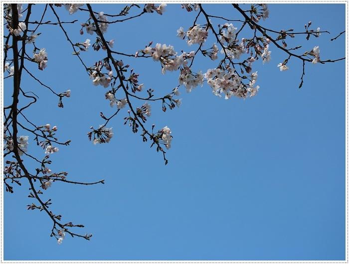 お散歩コースの桜の開花はもう少し先になりそうだけど、楽しみが膨らんできました~\\(>3(O^-)/ウフ☆_b0175688_19305237.jpg