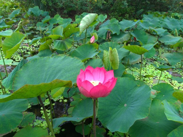 台湾旅行 (5) 台北植物園でのんびり&国立台湾博物館へ_f0100593_20141806.jpg