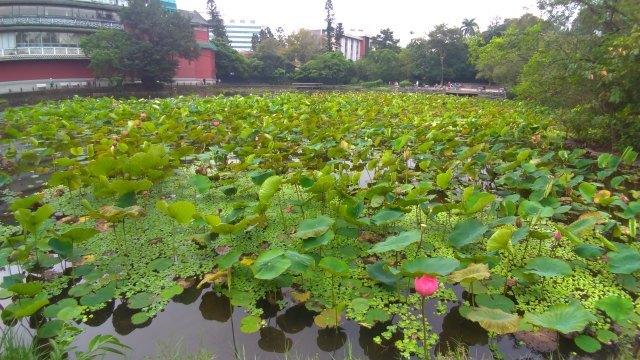 台湾旅行 (5) 台北植物園でのんびり&国立台湾博物館へ_f0100593_20144338.jpg