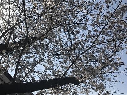 春風_a0155408_14212707.jpg