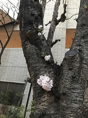 春風_a0155408_14261457.jpg