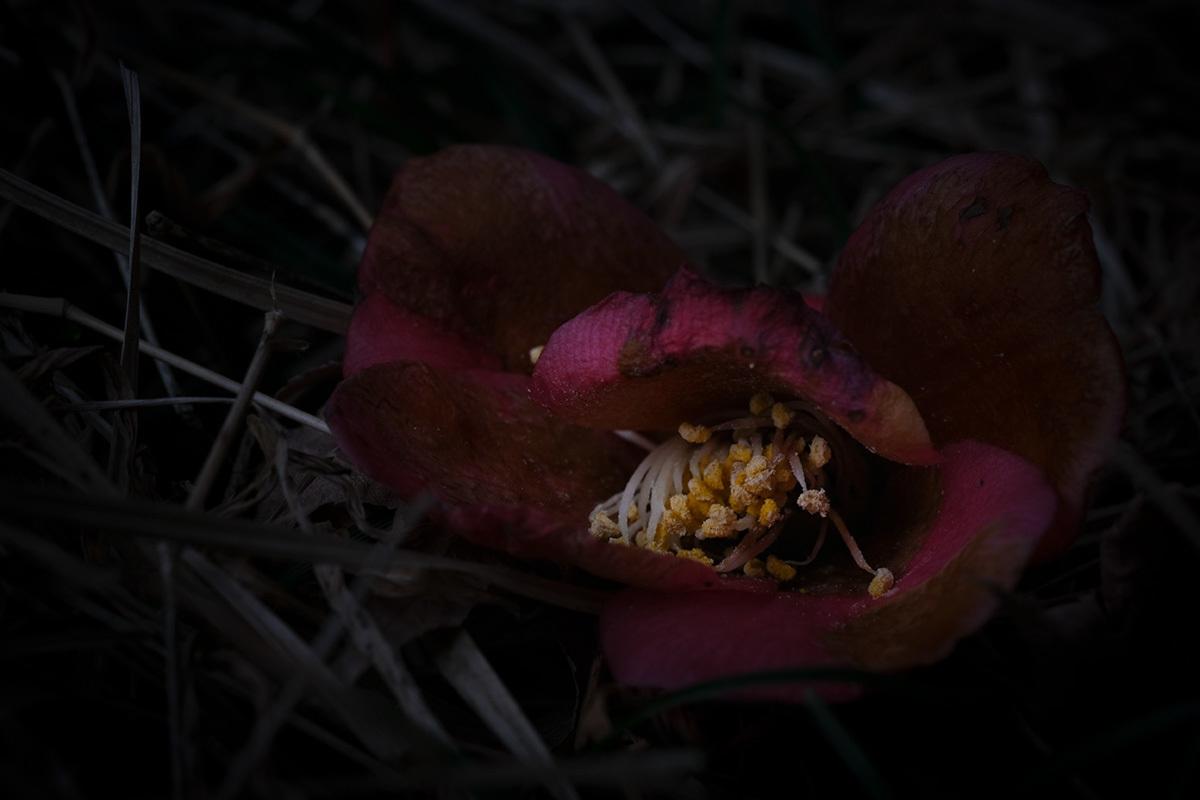 X-T30 見参 そのIII スミレの花の咲く頃 #FUJIX-T30_c0065410_22463579.jpg