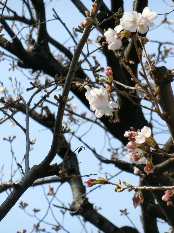 3月27日(水)春休みに入り忙しくなりました_d0278912_23055412.jpg