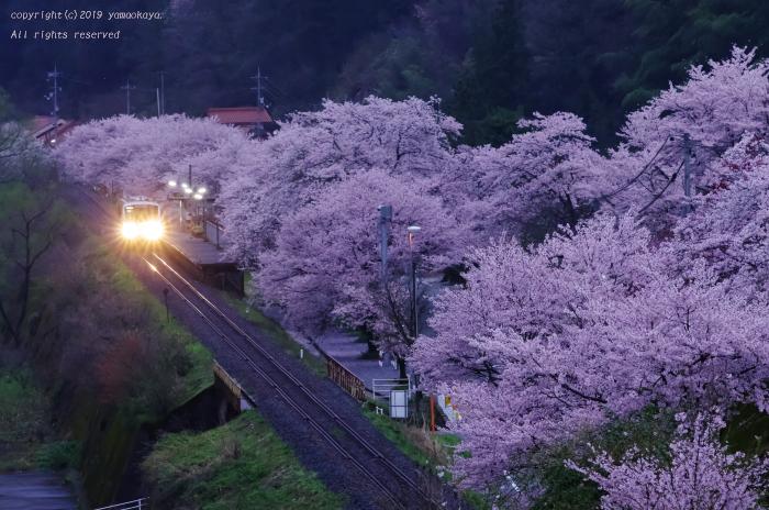 桜の駅の朝_d0309612_00421693.jpg