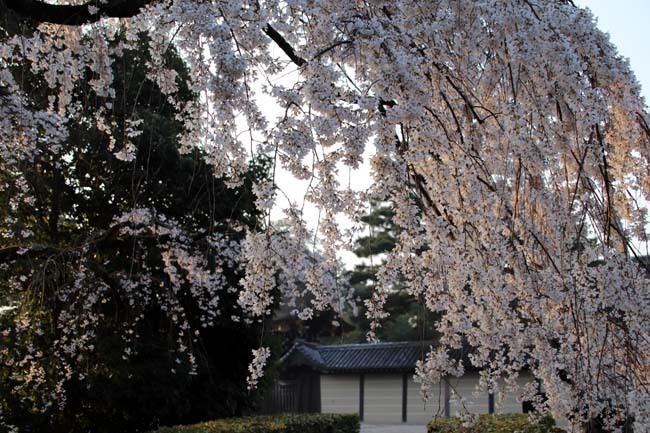 天皇陛下 京都御苑近衛邸跡へ _e0048413_19150243.jpg