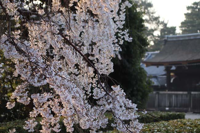 天皇陛下 京都御苑近衛邸跡へ _e0048413_19152702.jpg