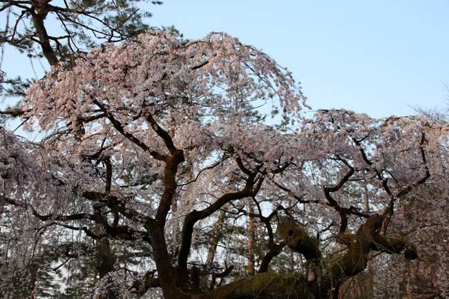 天皇陛下 京都御苑近衛邸跡へ _e0048413_19162699.jpg