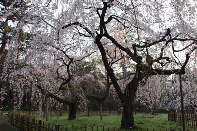 天皇陛下 京都御苑近衛邸跡へ _e0048413_19164520.jpg