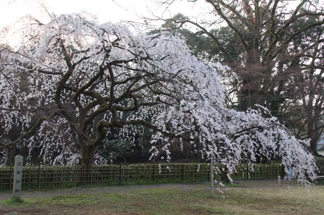 天皇陛下 京都御苑近衛邸跡へ _e0048413_19165705.jpg