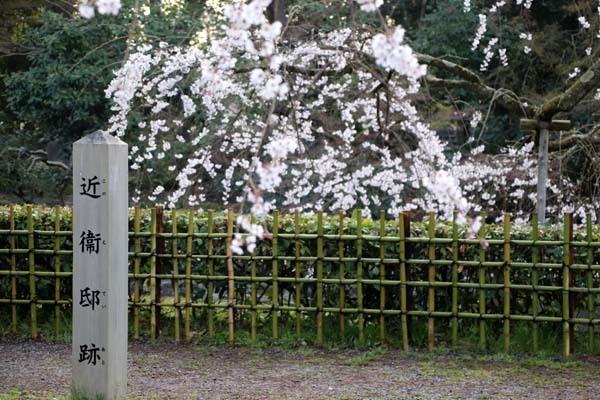 天皇陛下 京都御苑近衛邸跡へ _e0048413_19170145.jpg