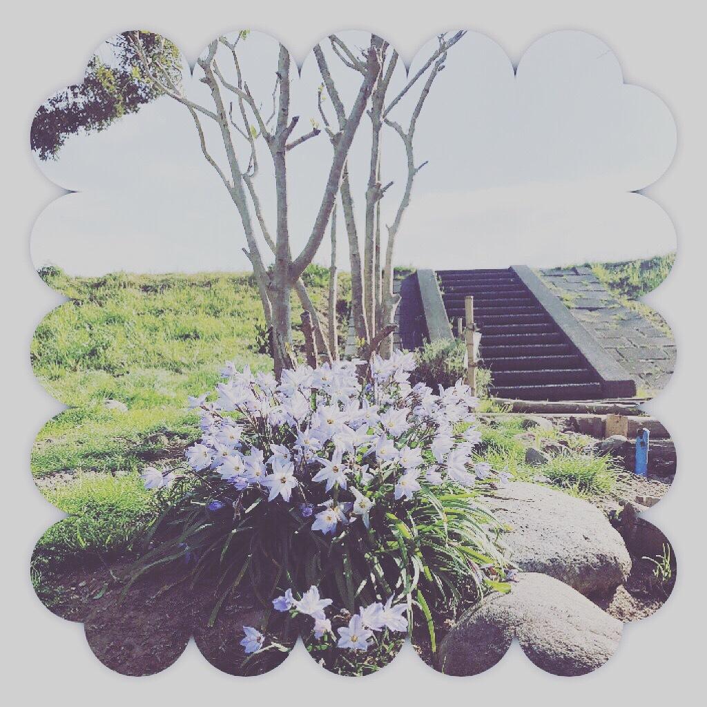 花にら_d0155416_09480817.jpeg