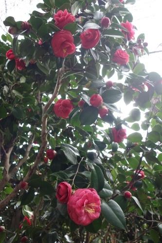 桜、始まりました_a0197730_13105996.jpg