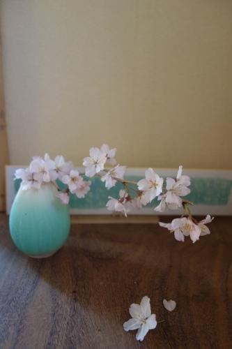 桜、始まりました_a0197730_13113574.jpg