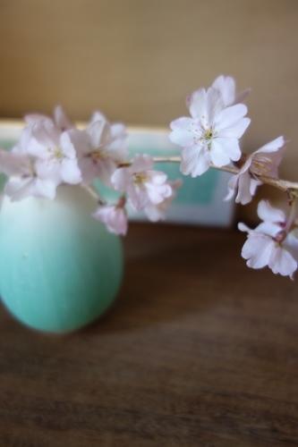 桜、始まりました_a0197730_13114462.jpg