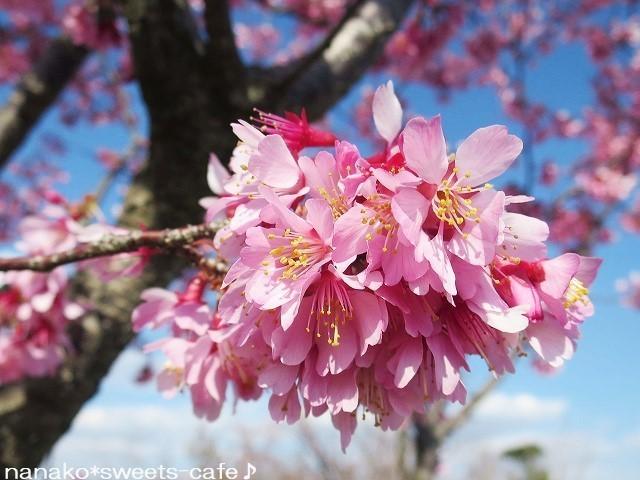 お散歩 * 可愛いオカメ桜_d0147030_20070429.jpg