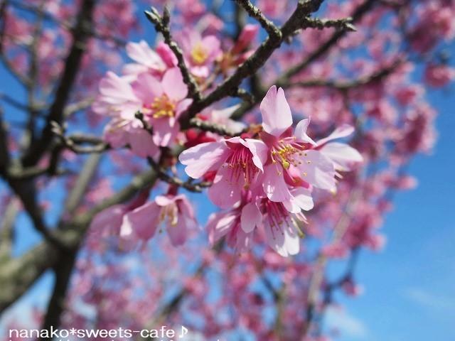 お散歩 * 可愛いオカメ桜_d0147030_20071696.jpg