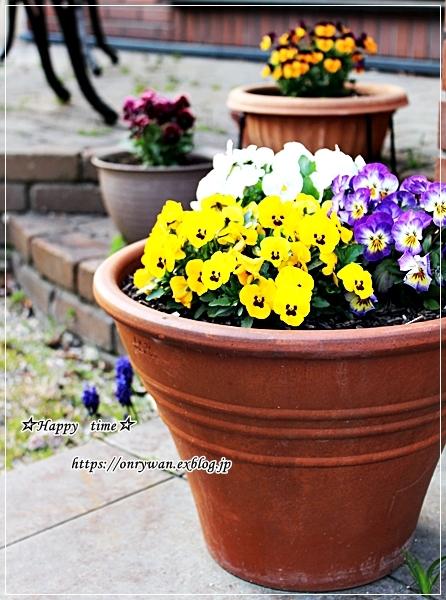 庭からビオラとパン焼き・リッチな角食♪_f0348032_17561054.jpg