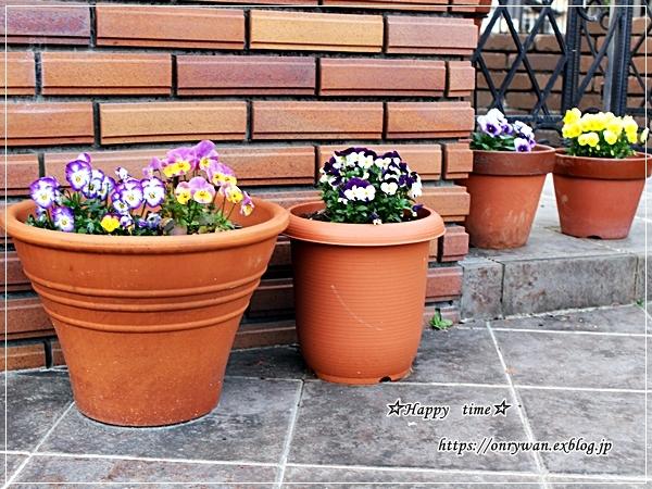 庭からビオラとパン焼き・リッチな角食♪_f0348032_17561823.jpg