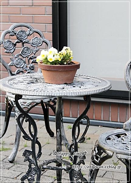 庭からビオラとパン焼き・リッチな角食♪_f0348032_17562678.jpg