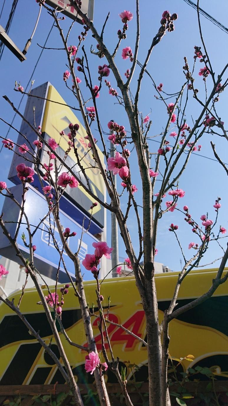 お花が咲き始めました_d0155439_14502562.jpg