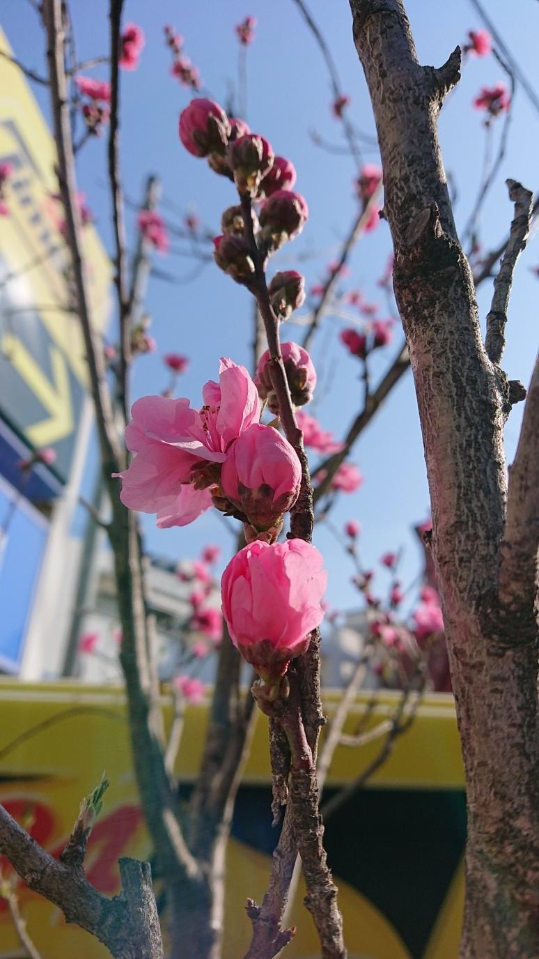 お花が咲き始めました_d0155439_14503953.jpg