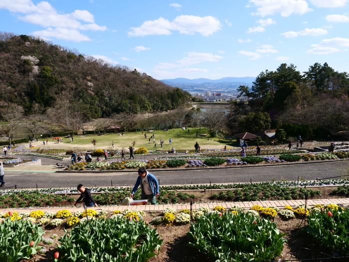 和歌山県植物公園緑花センター(終)  2019-03-28 00:00   _b0093754_22174310.jpg