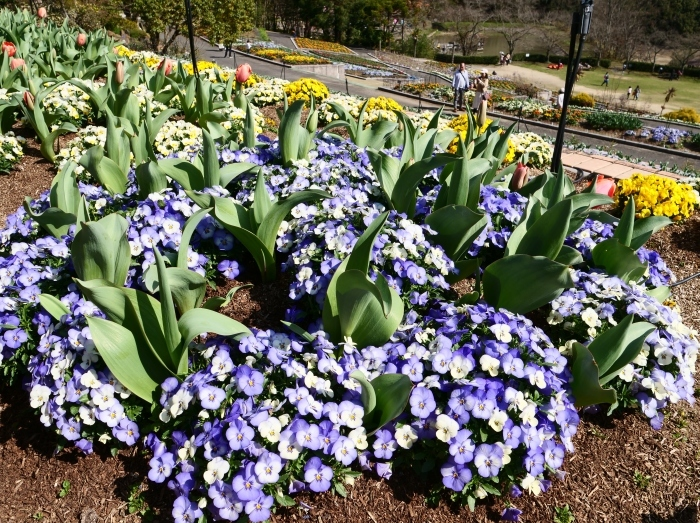 和歌山県植物公園緑花センター(終)  2019-03-28 00:00   _b0093754_22181206.jpg