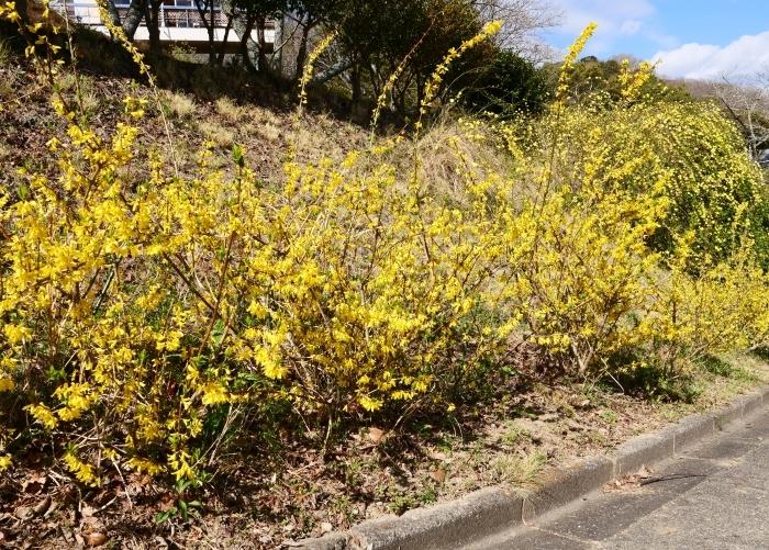 和歌山県植物公園緑花センター(終)  2019-03-28 00:00   _b0093754_22183507.jpg