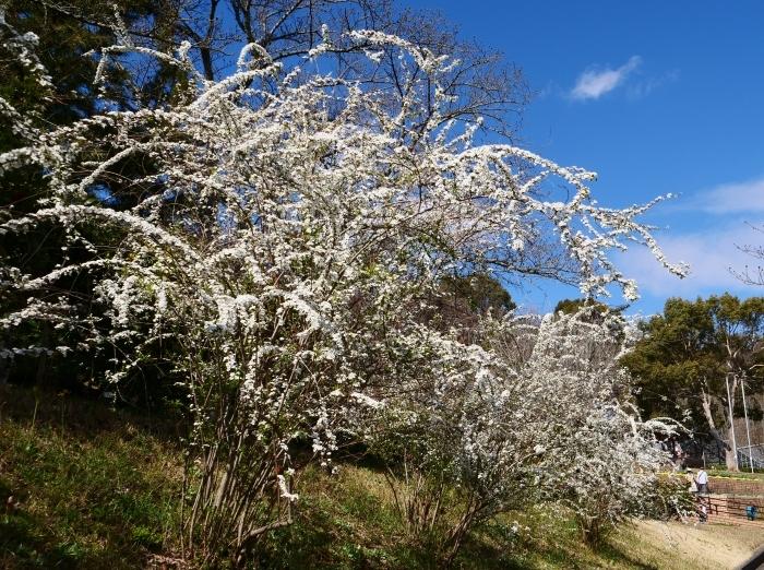 和歌山県植物公園緑花センター(終)  2019-03-28 00:00   _b0093754_22184550.jpg