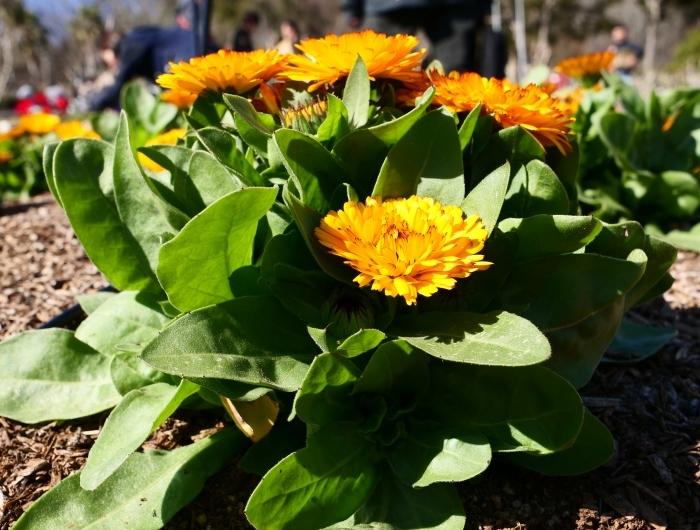 和歌山県植物公園緑花センター(終)  2019-03-28 00:00   _b0093754_22190693.jpg
