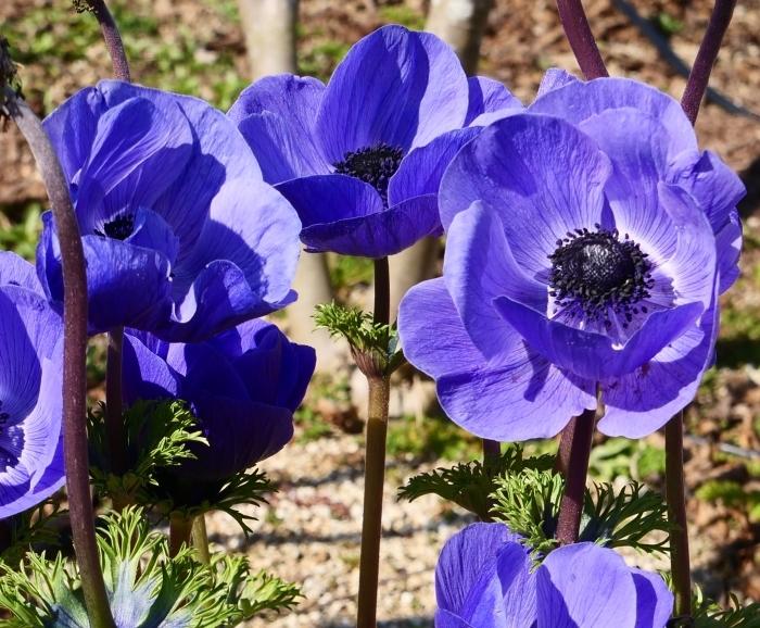 和歌山県植物公園緑花センター(終)  2019-03-28 00:00   _b0093754_22192418.jpg