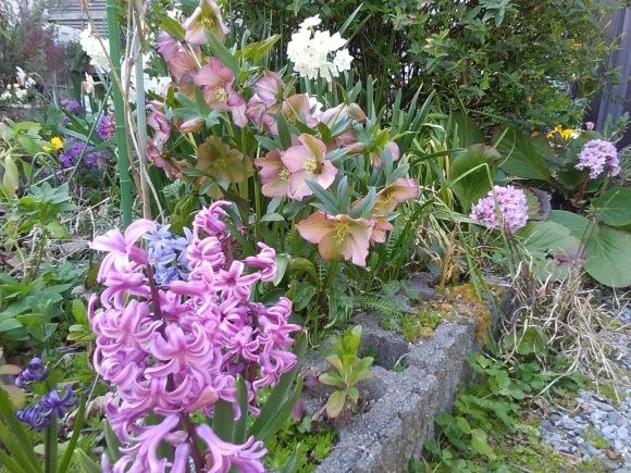 庭先も春の饗宴_d0116059_09513163.jpg