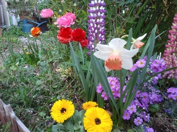 庭先も春の饗宴_d0116059_09530979.jpg