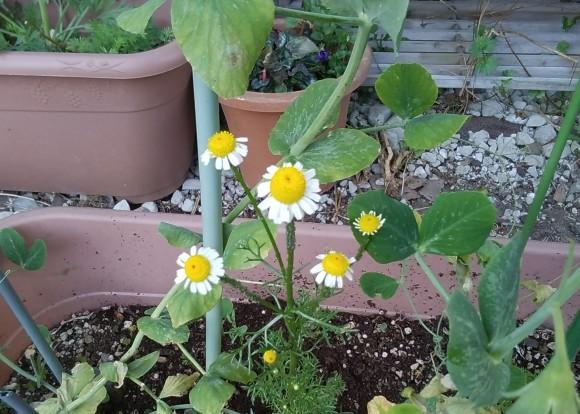 庭先も春の饗宴_d0116059_09551976.jpg